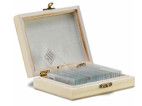 microscope slide set 25 slides